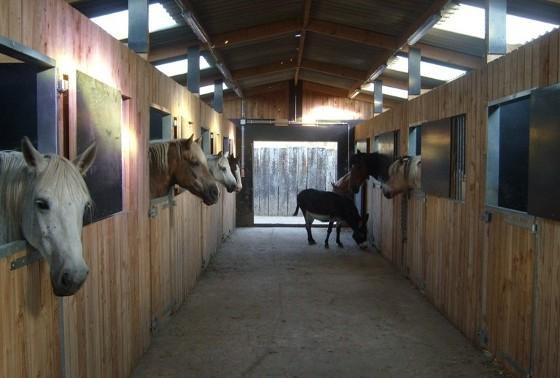 paarden1ws1