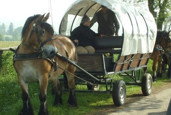 paarden4ws1